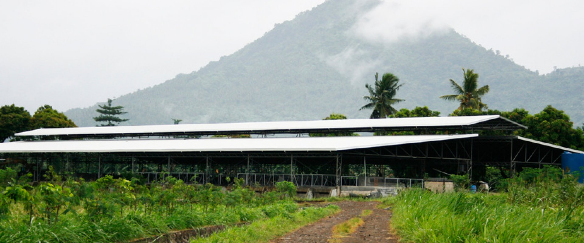 Our farm is perfectly nestled at the foothills of Mt. Banahaw with lush green rural terrain