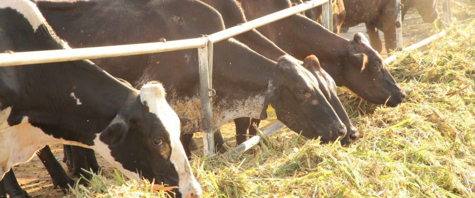 Balanced feeds for our cows